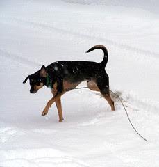 Tut_snowzip_122007b