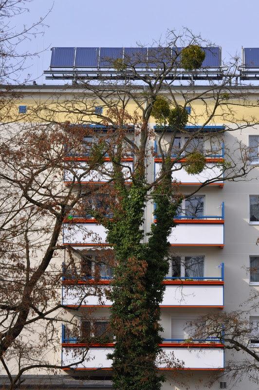 Potsdam (13)
