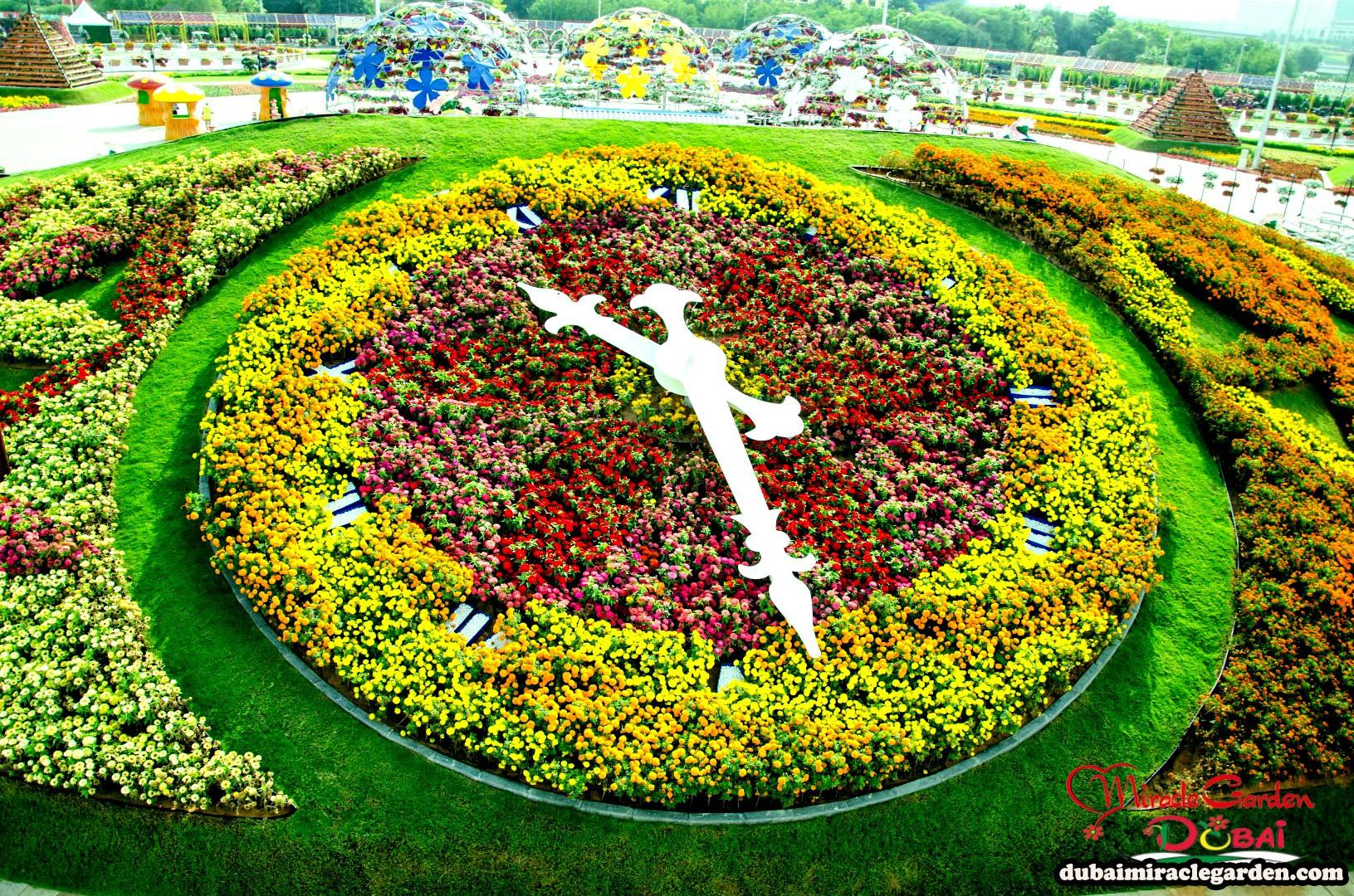 Dubai Miracle Garden 34