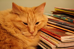 Napping on the magazines