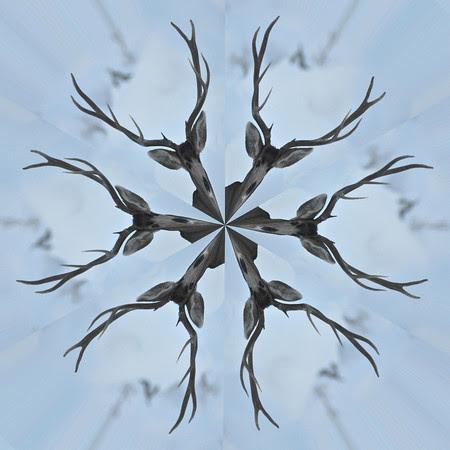 Antlerflake