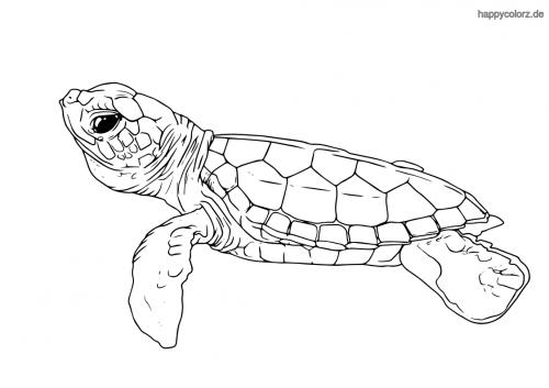 kostenlos ausmalbilder tiere zoo  kostenlose malvorlagen