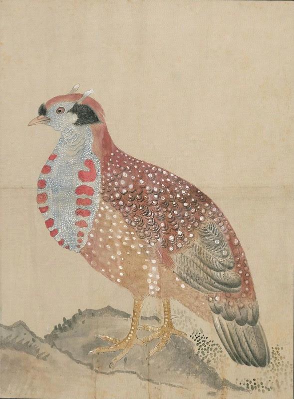 Ink + Watercolour  Bird sketch w