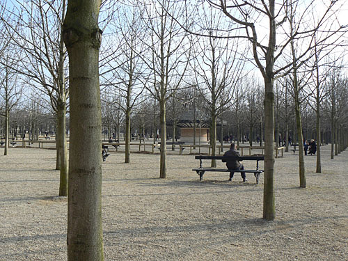 arbres sans feuilles.jpg