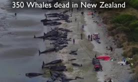 Νεκρές φάλαινες Farewell Spit