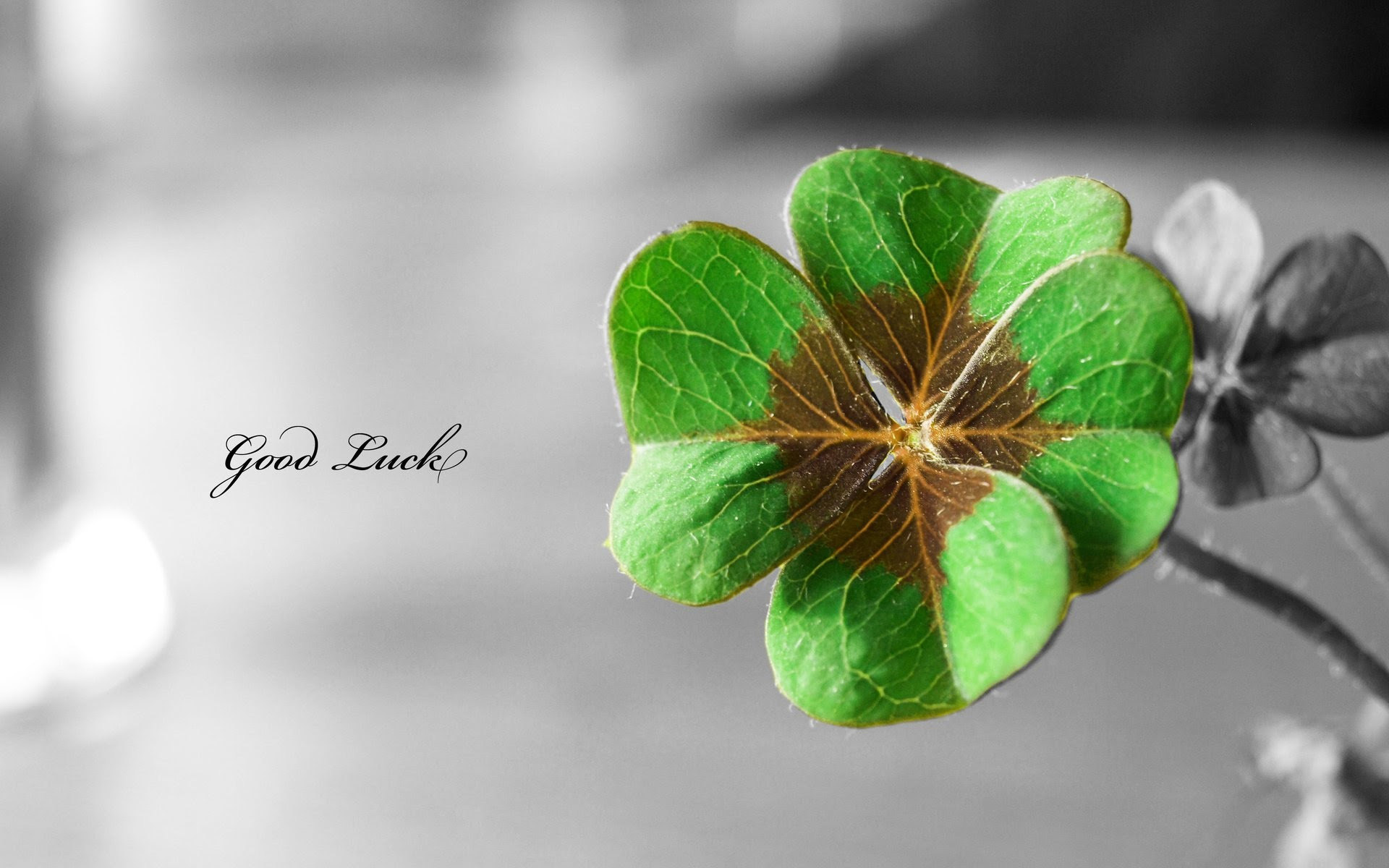 Hd St Patricks Day Wallpaper 80 Images