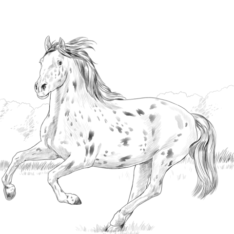 knabstrupper horse coloring page  free printable coloring