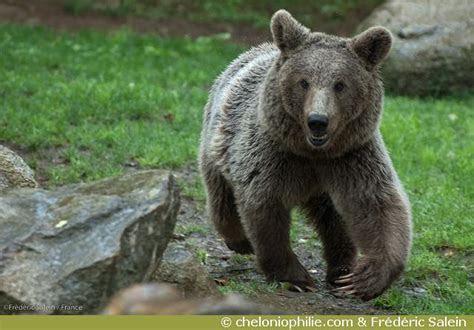Les photos de l'ours brun