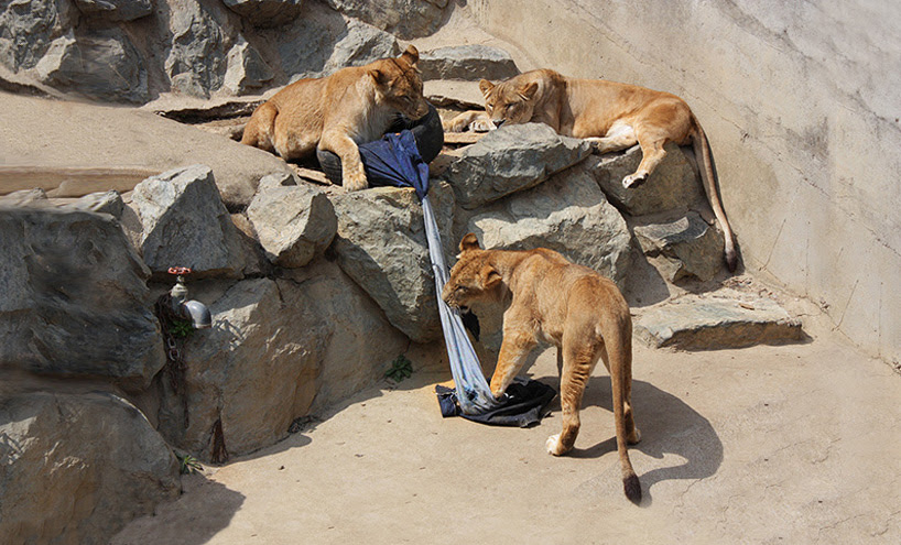wild animals rip and shred denim to fabricate zoo jeans