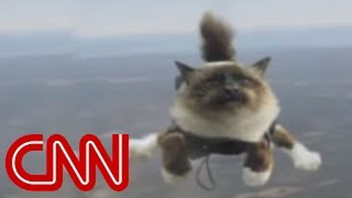 Skydiving Cats Cause Uproar To All The Alarmed Cat Owners
