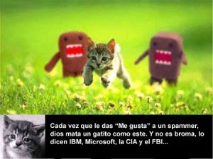 gatitos spam facebook
