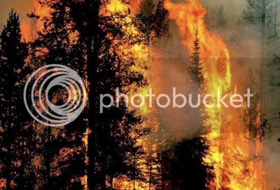 photo forest-fire_zps56c45081.jpg