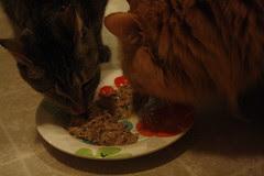 Maggie sharing her birthday cake with Jasper
