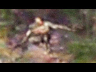 Extraña Criatura captada en un Bosque / Strange creature spotted in a Forest