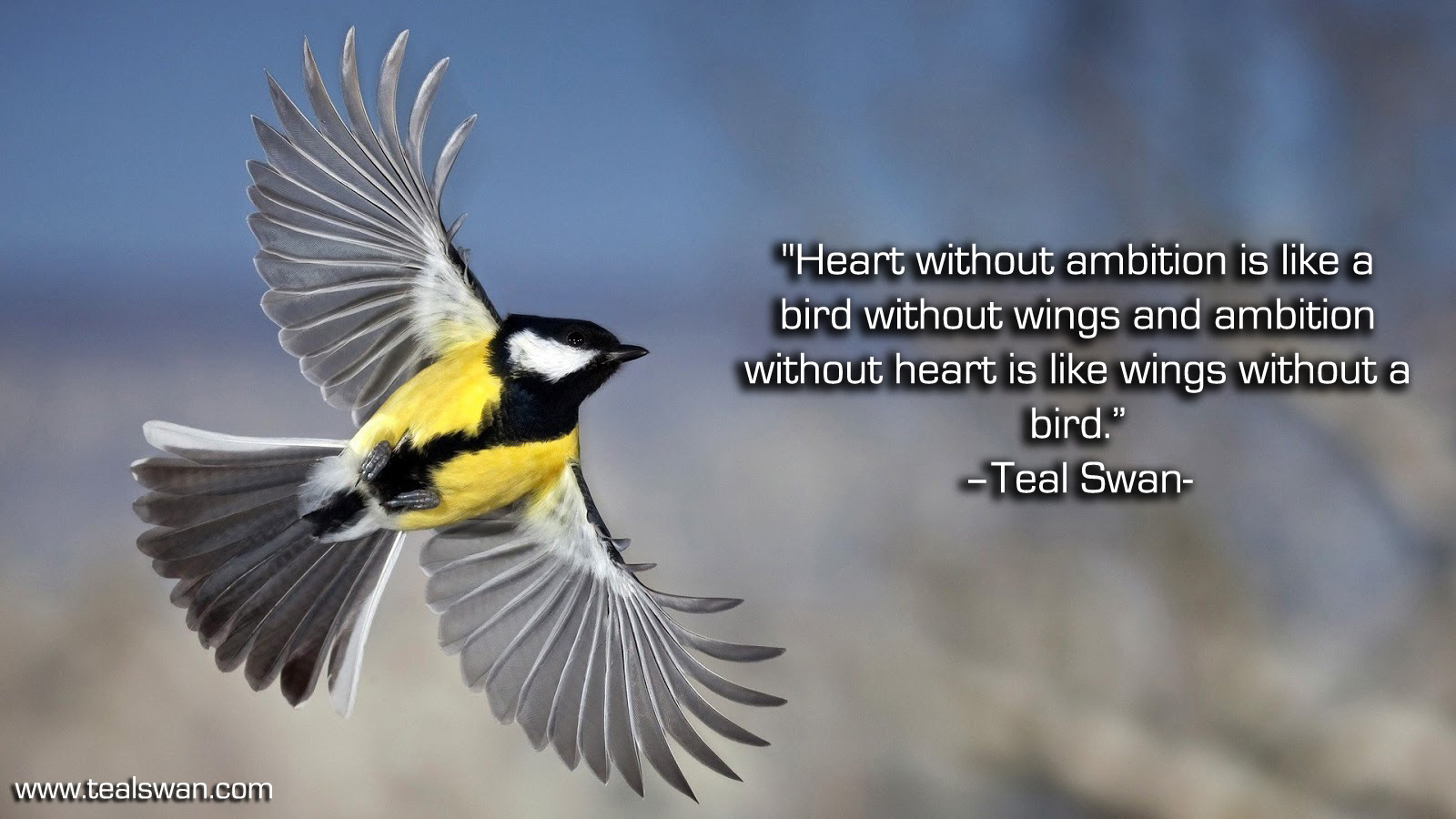 Beautiful Bird Quotes 58329 Quotes About Bird Photography 24 Quotes
