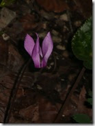 06 roža