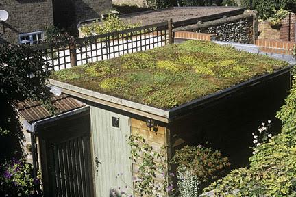 Green Roofs Rhs Gardening
