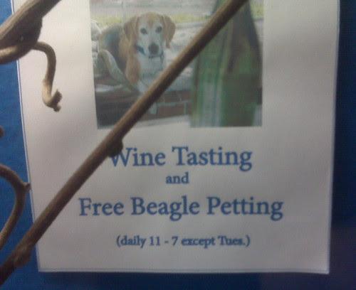 free_beagle_petting_wine