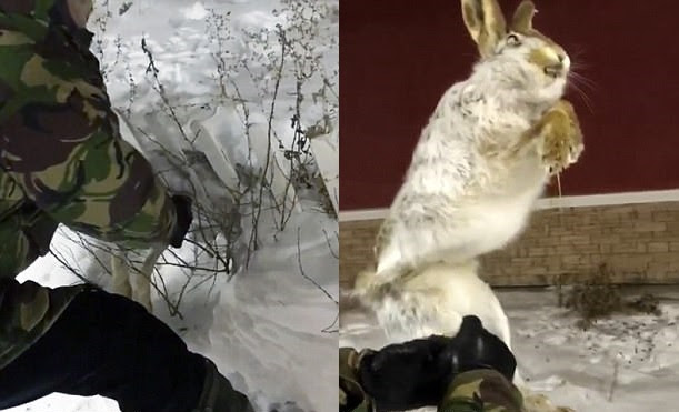 It is so cold in Kazakhstan that animals freeze solid, frozen hare kazakhstan video, hare froze solid in January 2018 january 2018