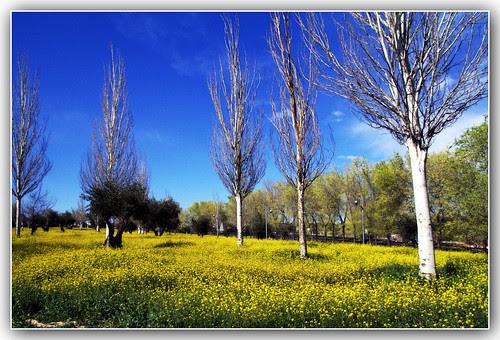 las afueras: jaramagos, olivos y chopos