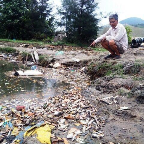 Cá chết hàng loạt, biển miền Trung, ô nhiễm, Vũng Áng, Formosa