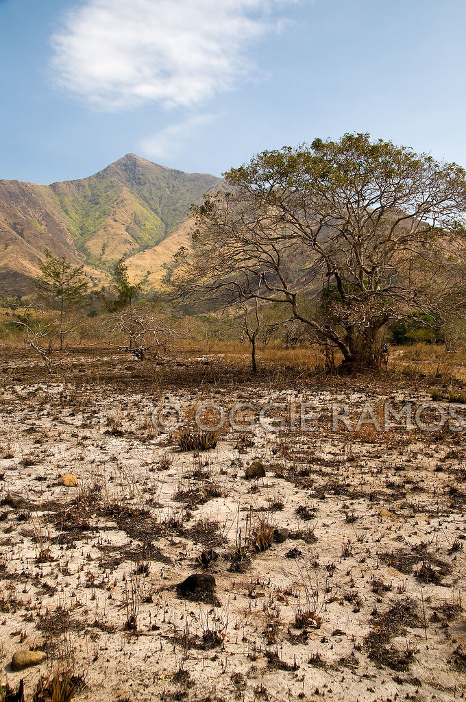 Nagsasa - Dried-Up and Burnt-Grassland