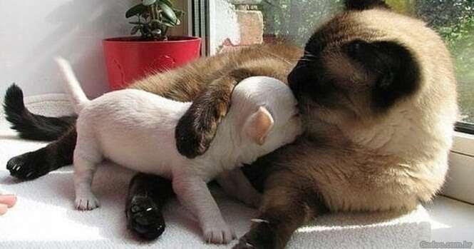 Gatos fofos apaixonados por cãezinhos
