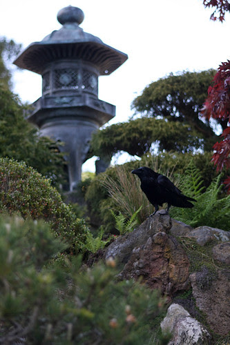Bird enjoying the view