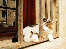 Sleepy venetian