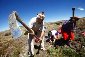 Image result for agricultura peruana
