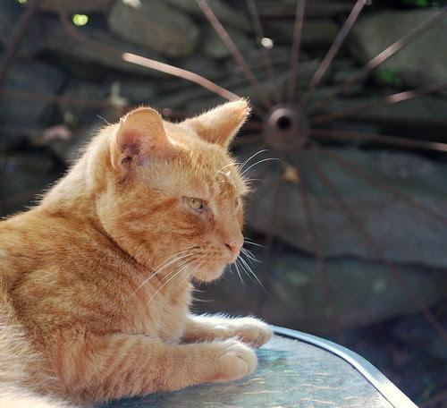 Watsons Farm kitty