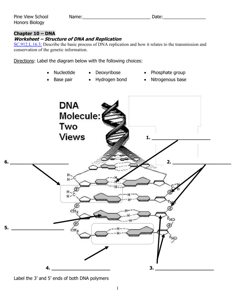 Dna Molecule And Replication Worksheet. Worksheets. Kristawiltbank Free printable Worksheets and