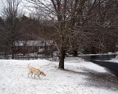 Zeus_snow_31908