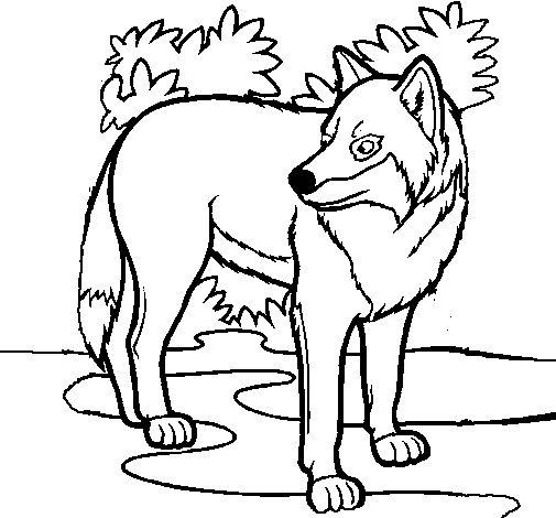 Lobo Animal Dibujo Crazywidowinfo