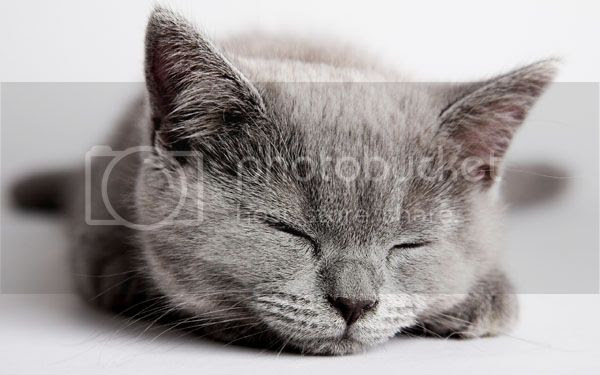 photo Sleeping-Kittenlr_zps4c9bbe2d.jpg
