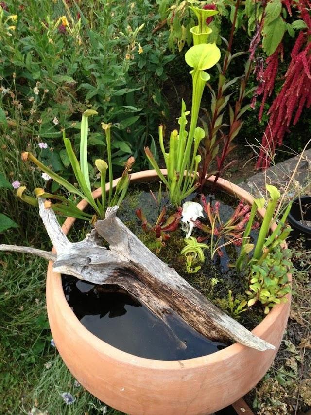 Удивительные мини-пруда для небольшого сада или террасы