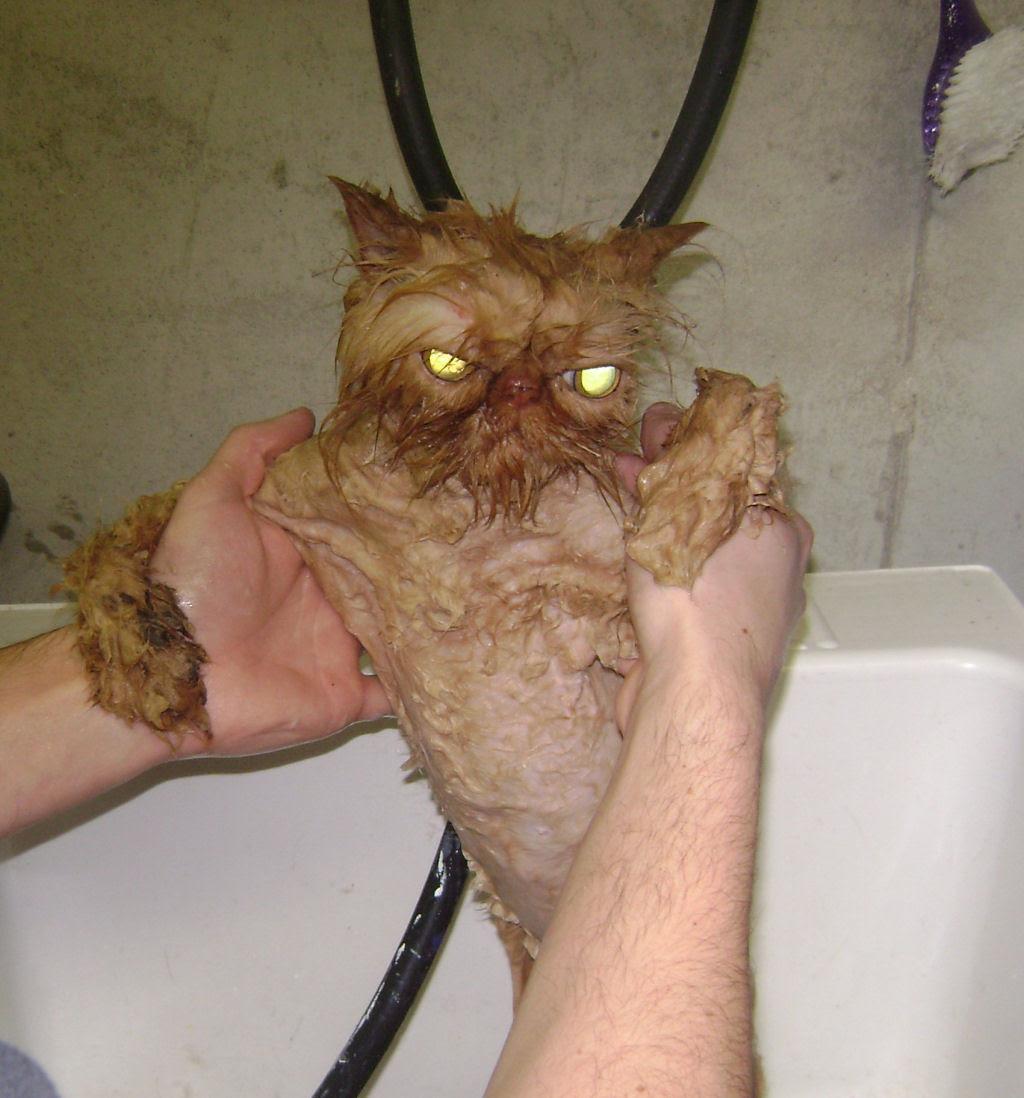 Fotografias engraçadas de gatos tomando banho 07