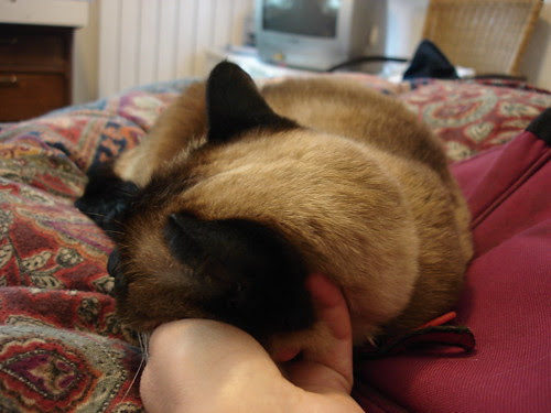 Her Ladyship falls asleep