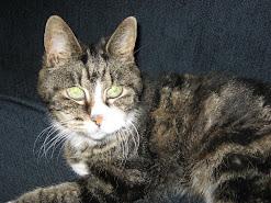 Kitty...1986-2007