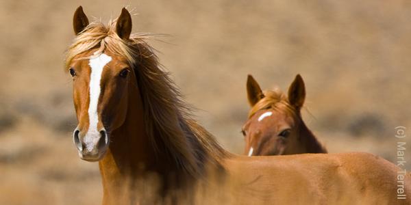 Mustangs by Mark Terrell