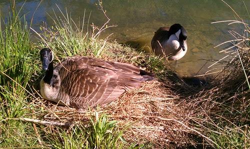 Look who's nesting! by aviva_hadas