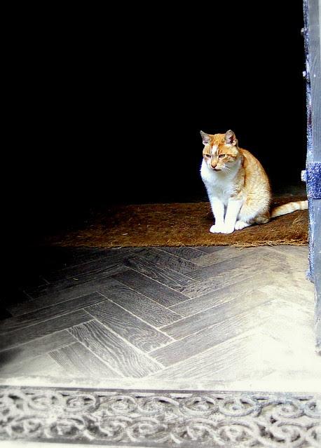 Chapel cat