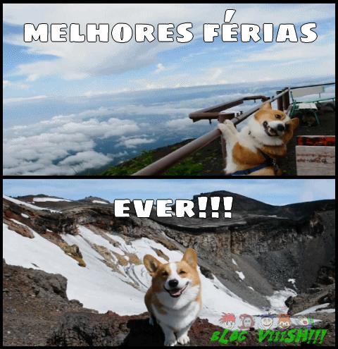 Blog Viiish - Sr. cachorro muito feliz!