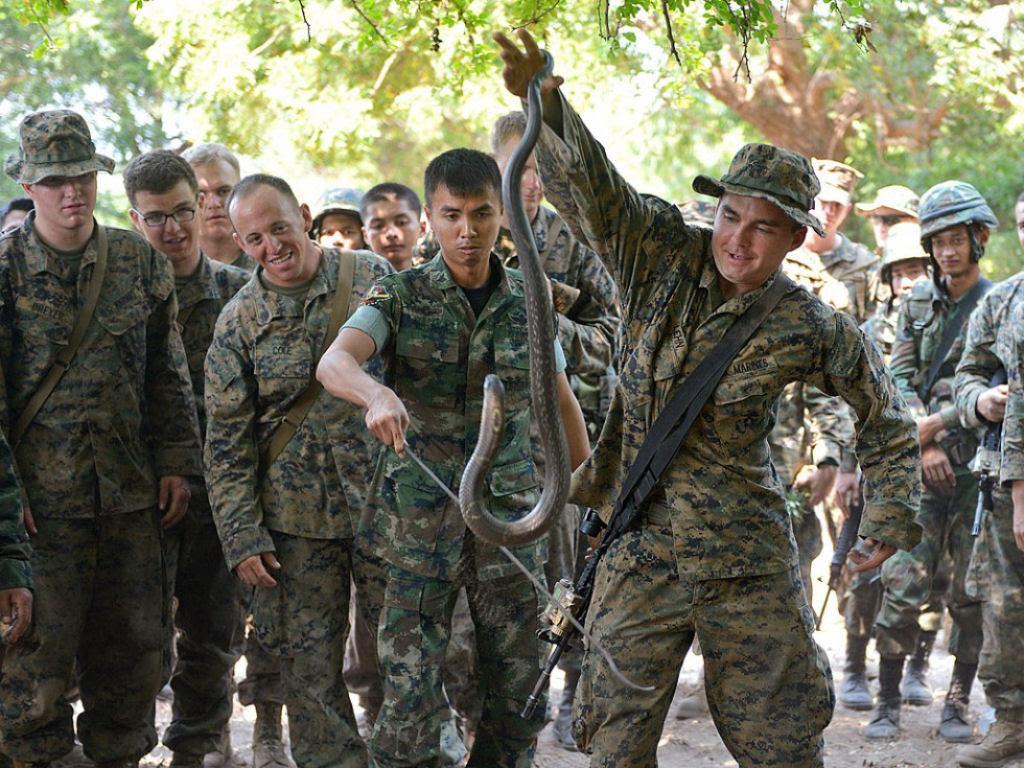 Cobra Gold 2013 - Militares sobrevivem com sangue de cobra na selva tailandesa 07