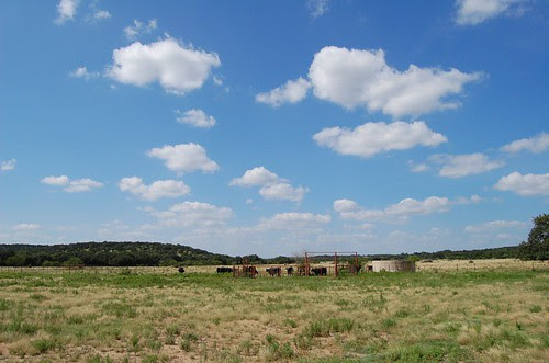 Ranch - Cattle, Horses