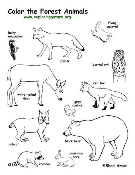 coloring habitats  animals images  pinterest