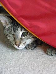 Maggie peeking around the tent