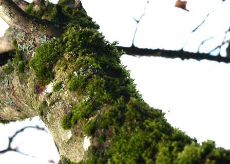 mossy 1