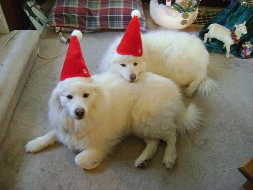 dogs wearing santa hats