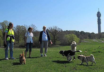 Promenad på Gärdet med hundarna